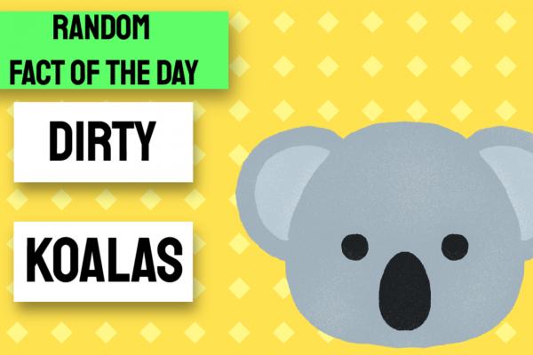 Template 4079195 Random Fact of the Day: Koala Bears